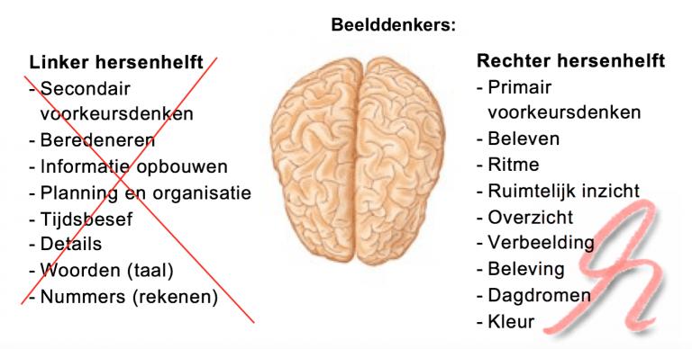 hersenhelften-met-functie